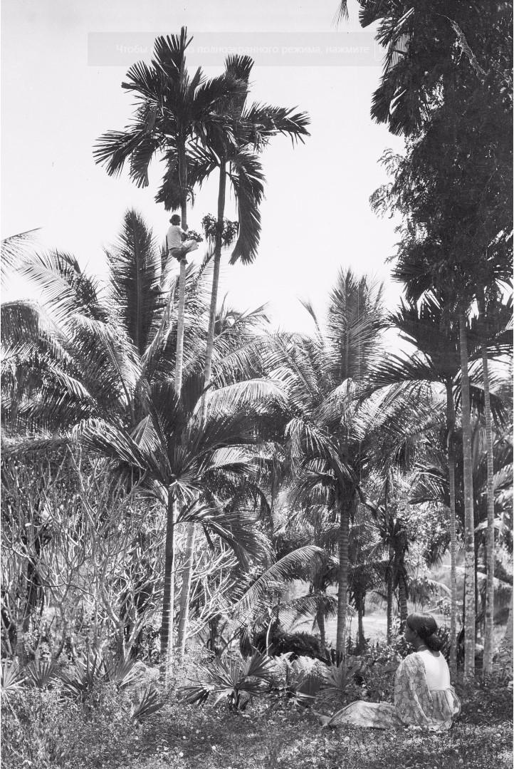 193. Жена окружного начальника в саду Валаувуa