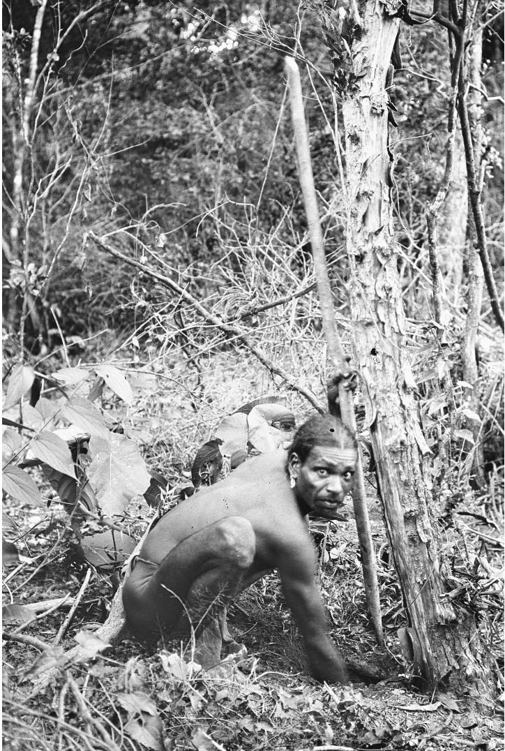 369. Лесной ведд выкапывает ямс