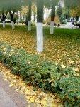 Бигалиев Азамат (рук. Мухтаров Руслан Жасталавович) - Осень в городе