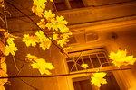 Свет и цвет осенний