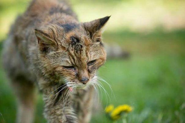 Самая старая кошка в мире (Крим Пафф, 1967 2005)   рекорды животных