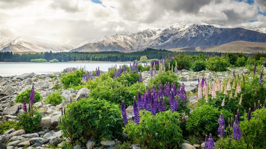 3. Новая Зеландия. Как можно не быть счастливым, когда вокруг тебя голубые горы, дикая природа и так