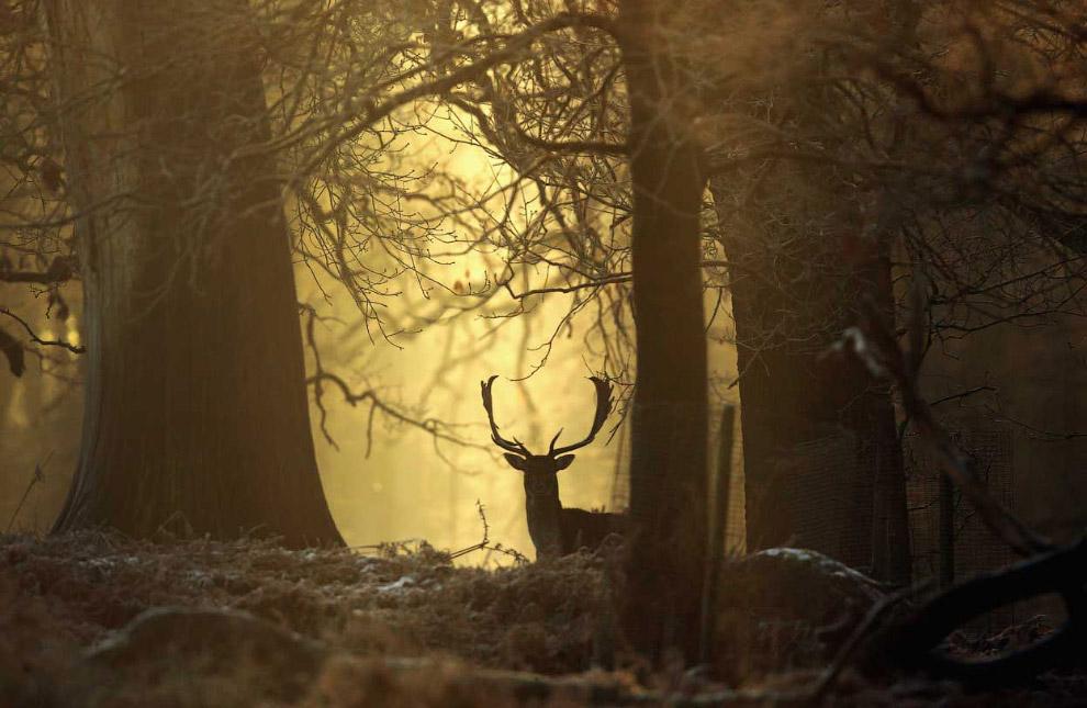 Климатологи считают, что зима начинается при опускании среднесуточной температуры ниже нуля по