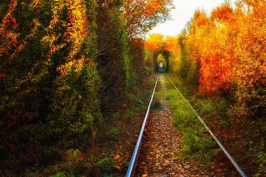 2. Румынский «Туннель любви». (Фото: Александр Маху)