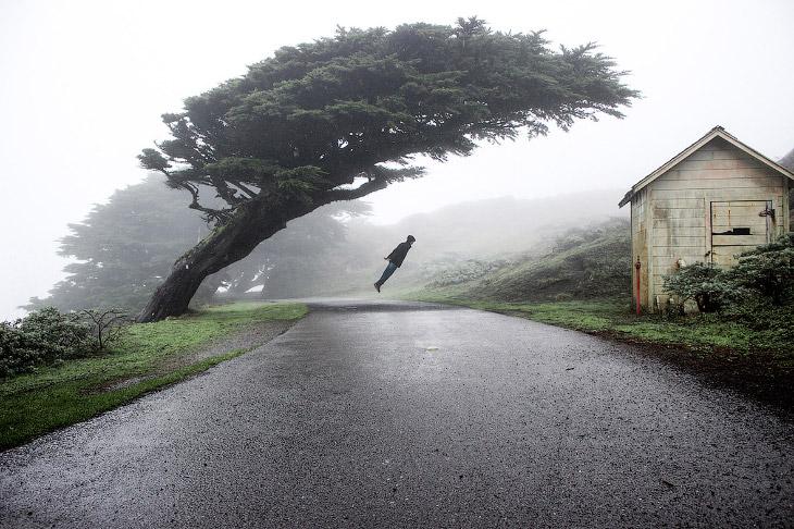 1. «Черно-белое», 2 место. Дуб в штате Калифорния. (Фото Michael Ryan | USA Landscape Photograp