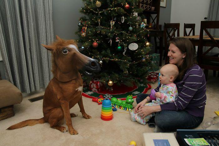Дочка хотела пони на Рождество.