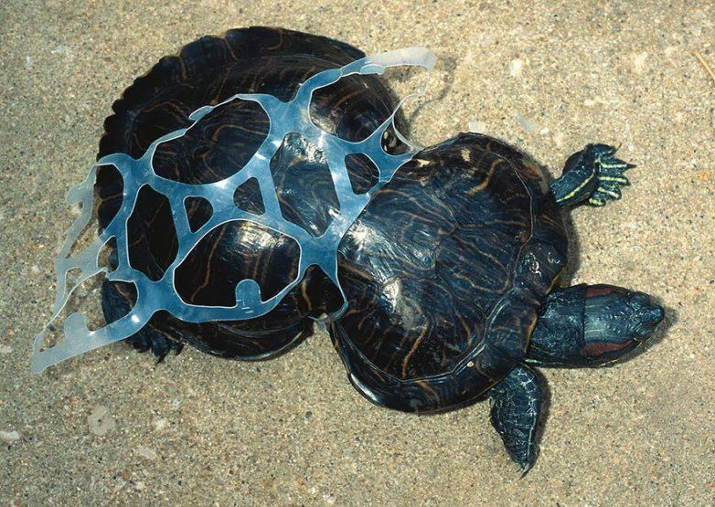 10. Пластиковая ловушка