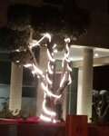 дерево на невиим.jpg