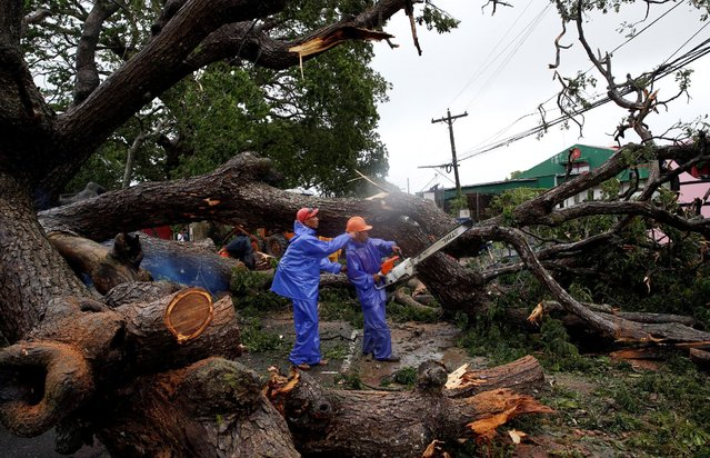 Government workers cut branches of an uprooted tree along a road after Typhoon Haima struck Laoag ci