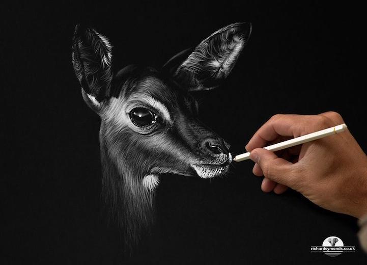 A vida selvagem retratada por Richard Symonds