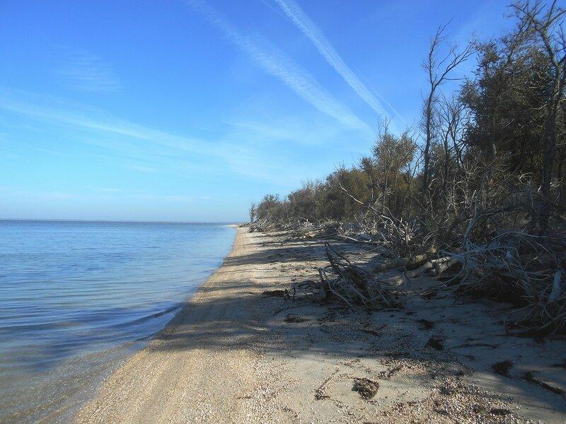 Леса взирали беспристрастно на море синее в дали ...DSCN9555.JPG