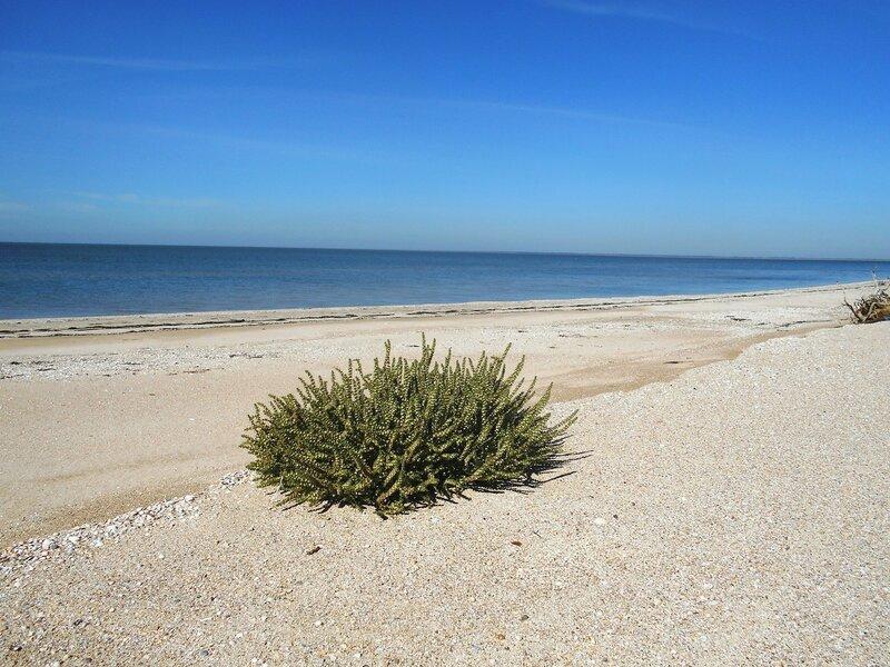 Произрастает на песках ... DSCN9602.JPG
