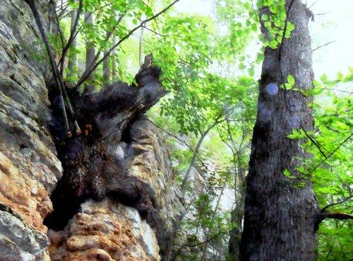 Дерево на камне ... SAM_0707.JPG