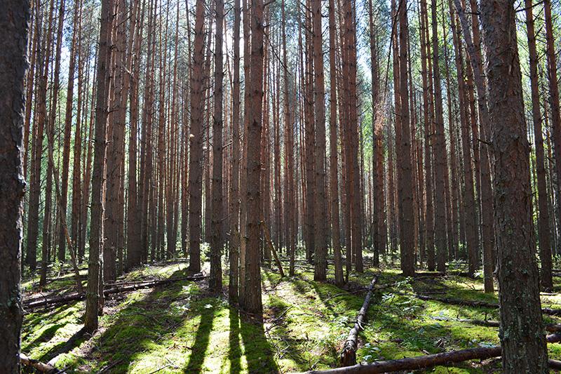 леса 10.jpg