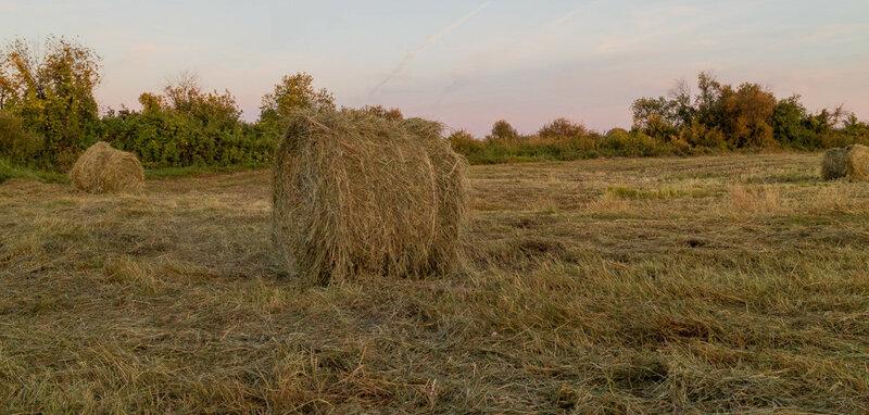 ранее утро на поле тюки сена