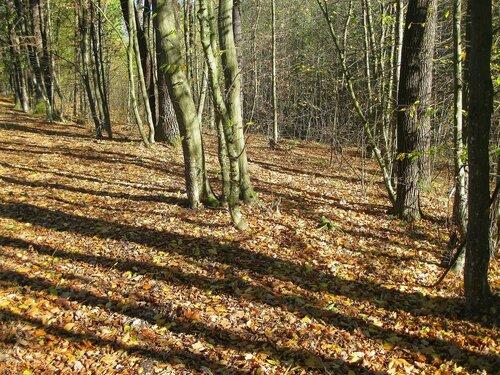 Тени в осеннем лесу