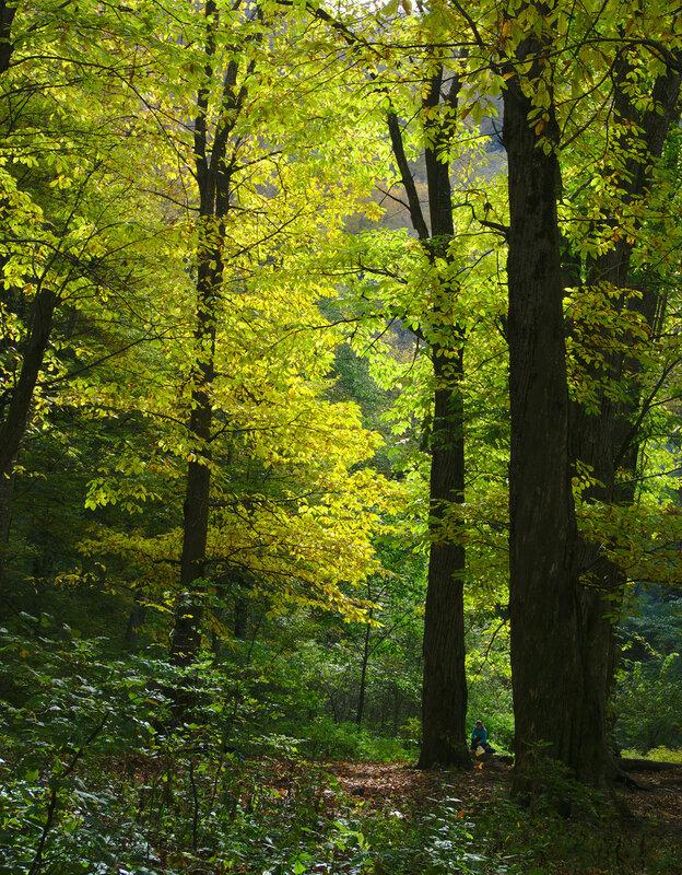 Турист в осеннем лесу
