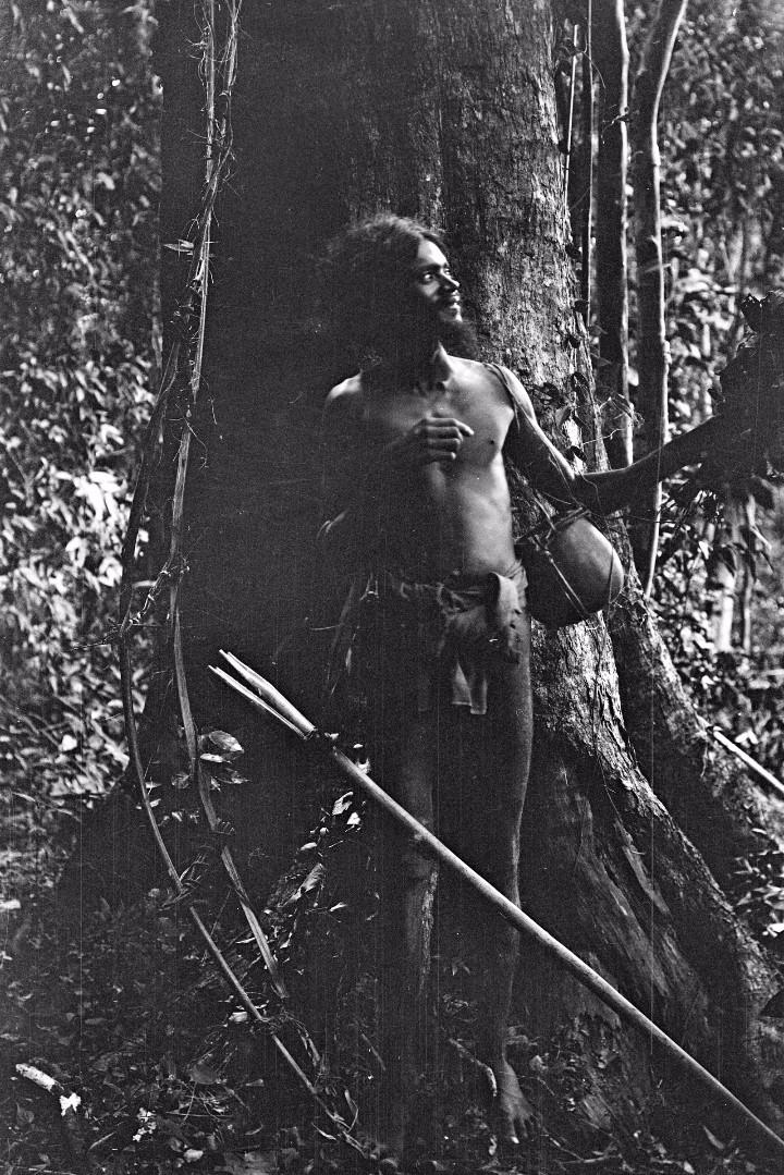 154. Мужчина ведда из Бингоды во время сбора пчелиного меда