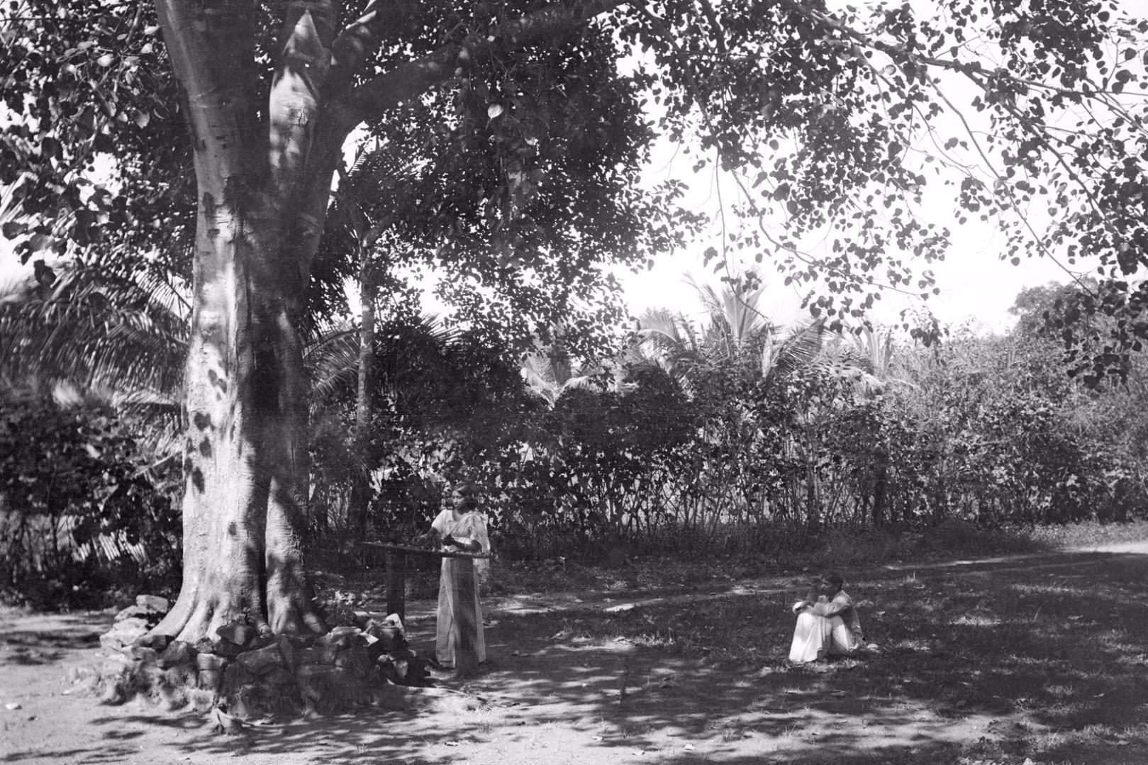 192. Окружной начальник с женой у священного дерева Бодхи в саду Валаувуa во время церемонии жертвоприношения