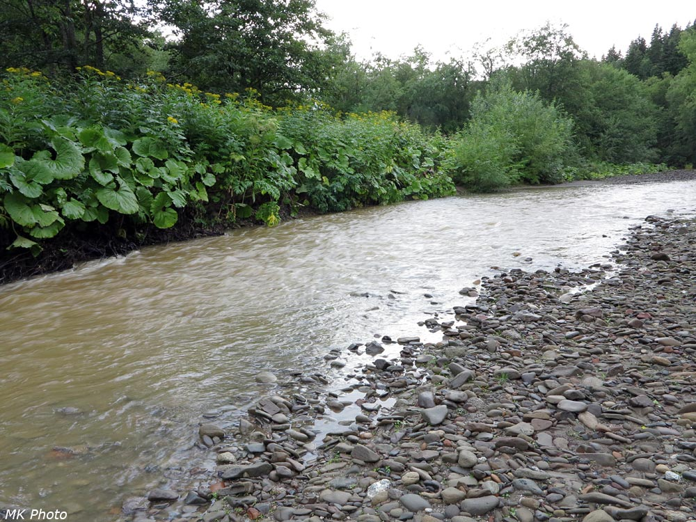 Мутные воды Найбы
