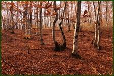 http://img-fotki.yandex.ru/get/195637/15842935.400/0_f0a5c_a8204dbe_orig.jpg