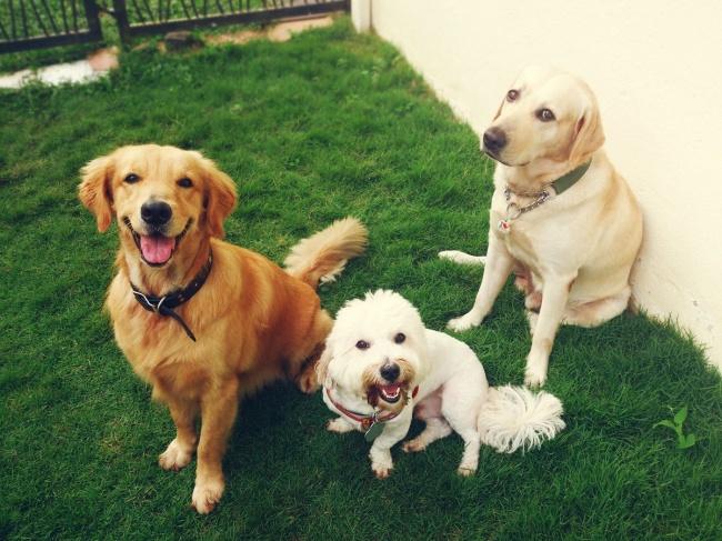 © vidanya  Мой пес ненавидит мыться, ноонзнает, что, если будет сидеть тихо, это закончится