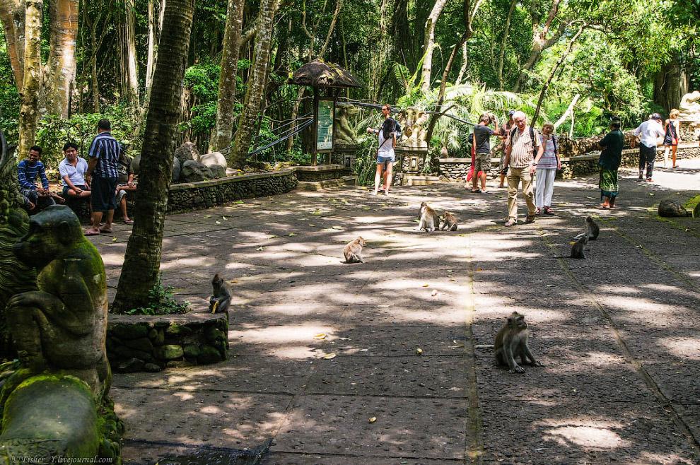 13. Они разделены на 5 группировок, каждая из групп проживает в отдельной части леса и состоит