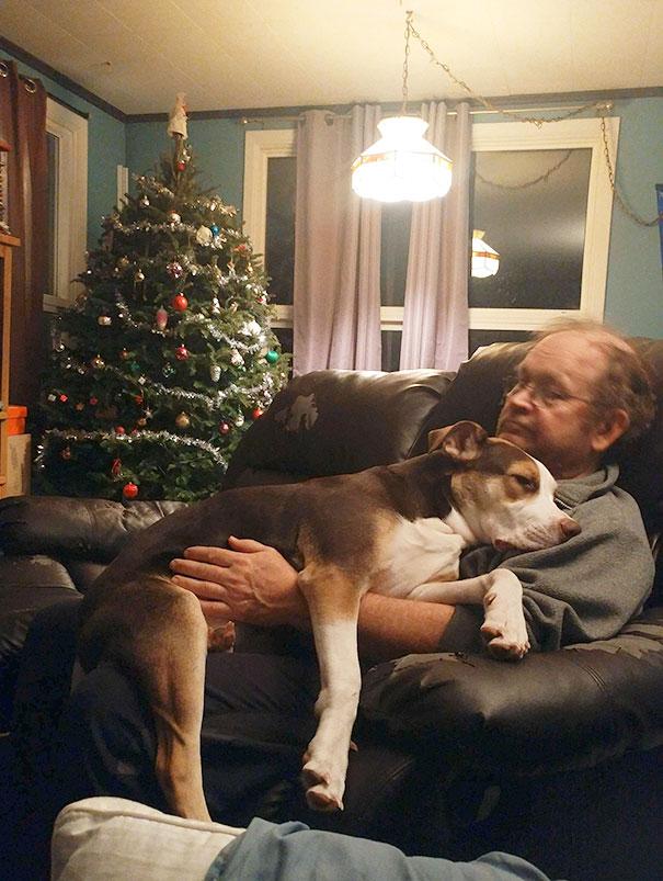 «Мой папа, который и слышать ничего не хотел о собаке».