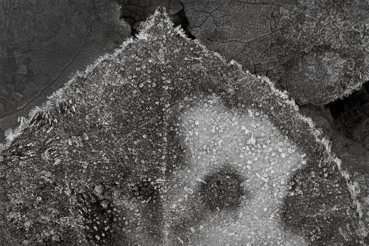 Заснеженный лес около озера Gem. (Фото Peter Essick):