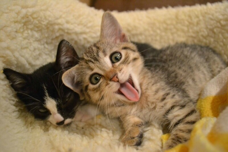 Эти забавные животные) tumblr_nz1r0szVvk1ums2ddo1_1280.jpg