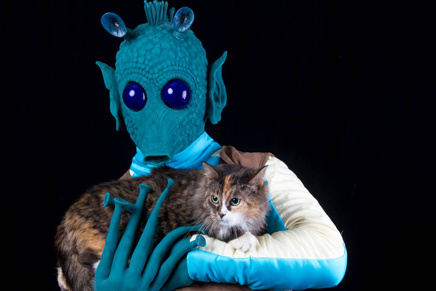 Shelter Animals Portraits with Star Wars Characters