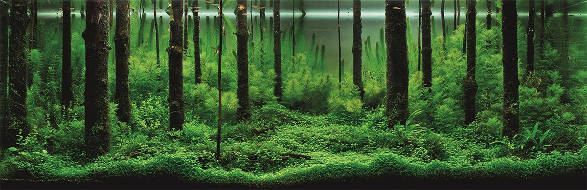 The Incredible Underwater Art of Competitive Aquascaping