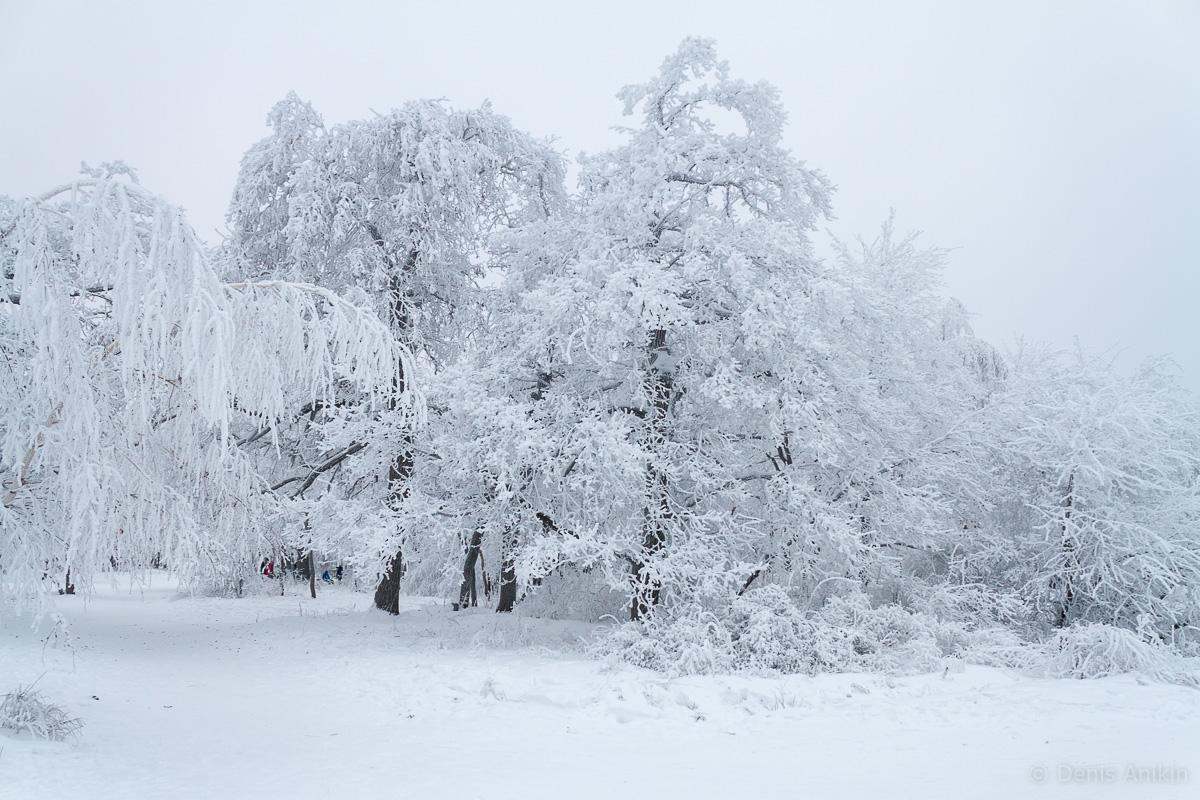 Кумысная поляна зима фото 4