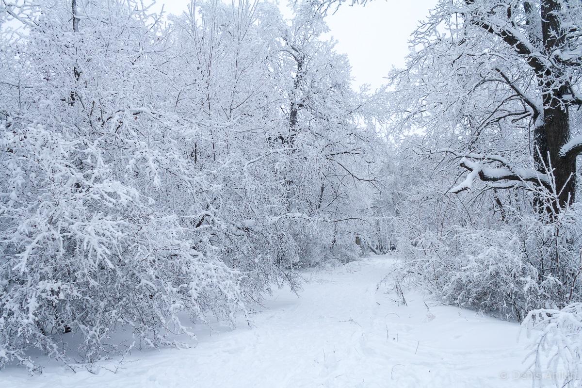 Кумысная поляна зима фото 9
