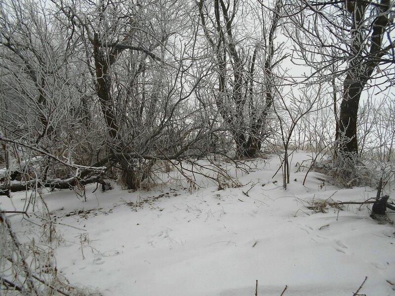 Есть красоты ... В походе декабрьском, снежно-туманном,