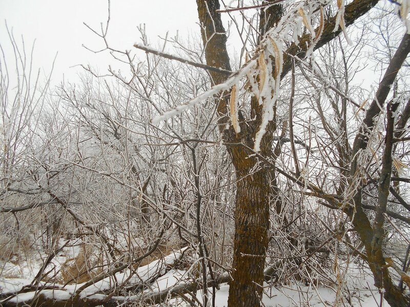 Приукрасил Дед Мороз ... В походе декабрьском, снежно-туманном,