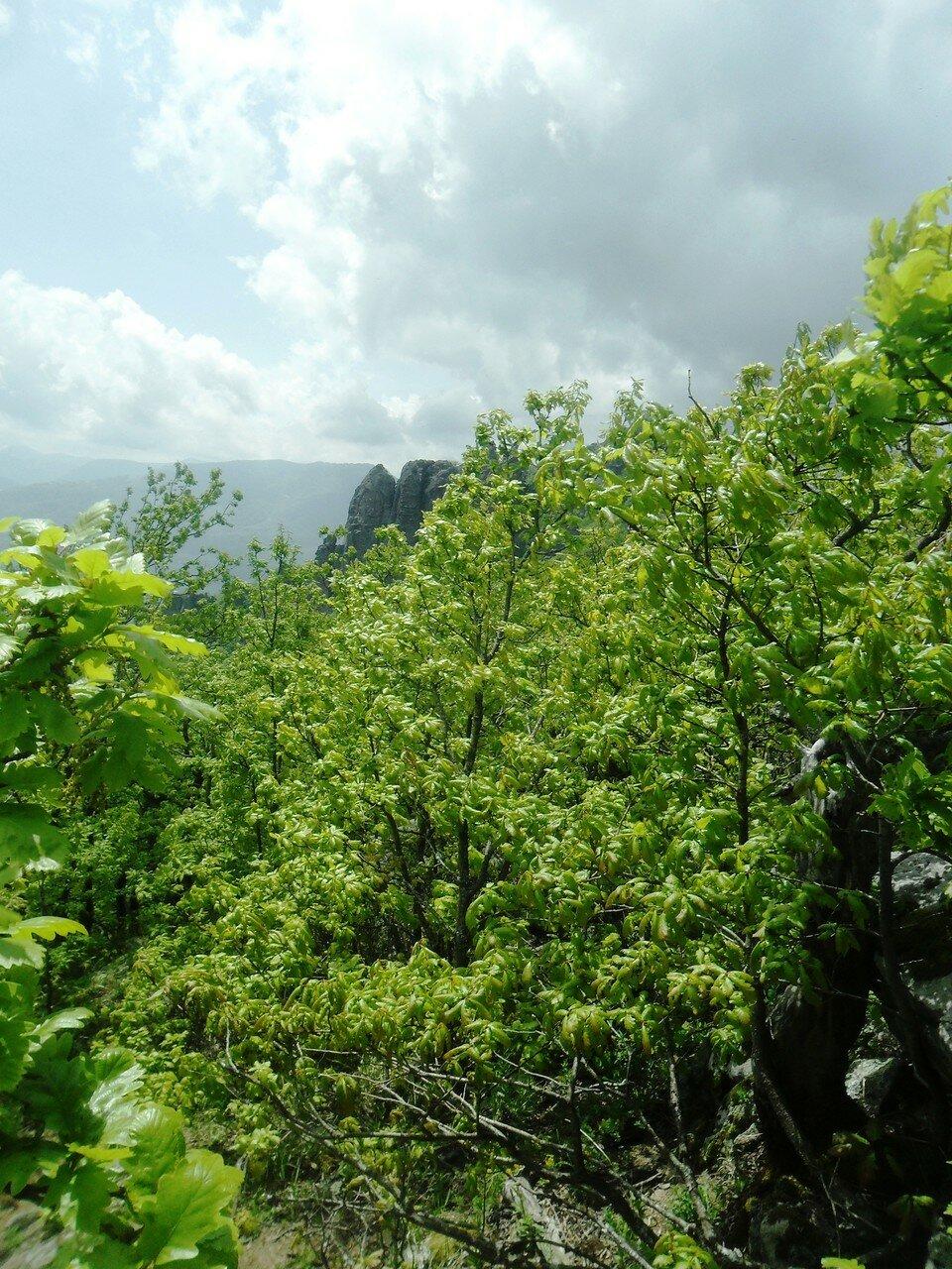 У верхушек горных лесов ... SAM_6956.JPG