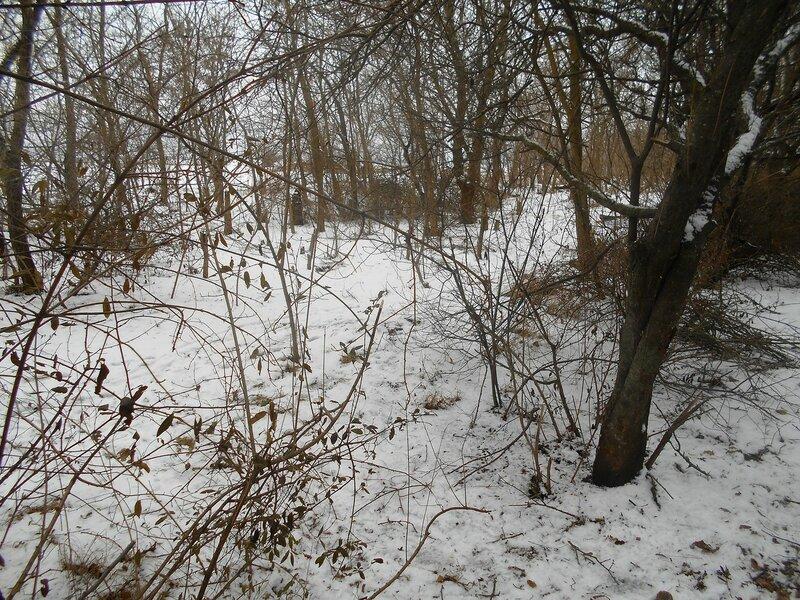 В лесу предновогоднем ... DSCN0834.JPG