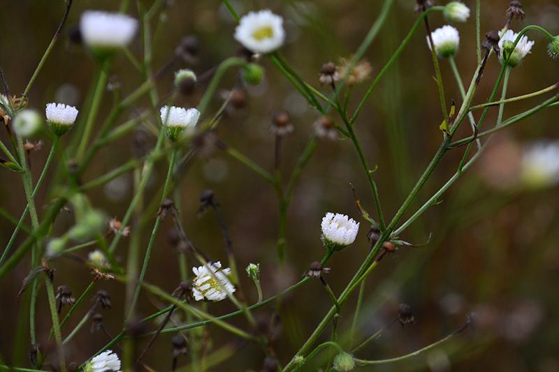 капельки трава 8.jpg