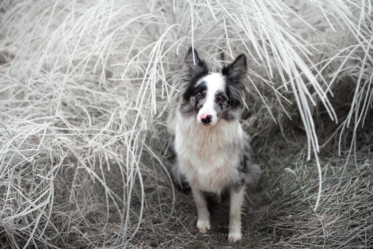 Зимний пес