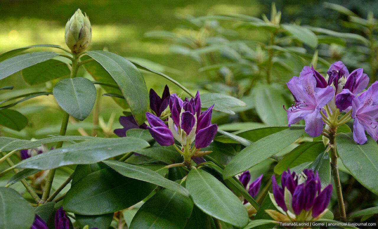 Цветы в Гомельском парке