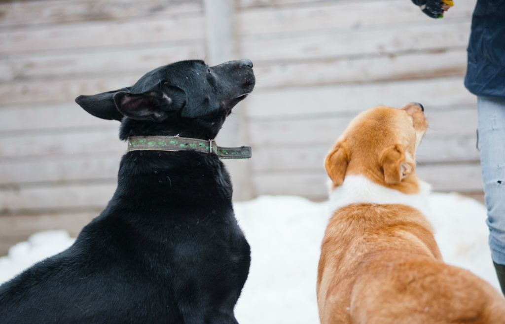 Доминика собака из догпорта