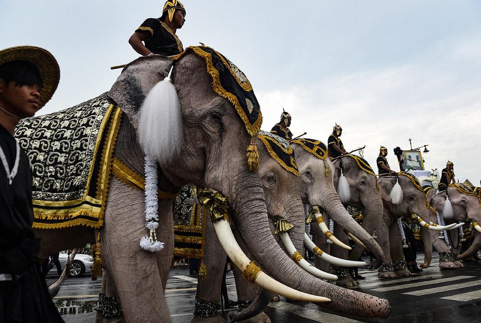 Слоны были