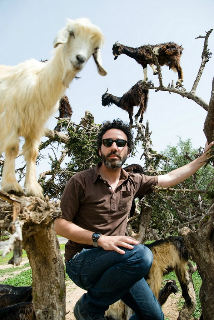 Козы на деревьях в Марокко