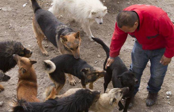 После того как в 2012 году пропал его любимый пес, Янь продал всё имущество и построил приют по