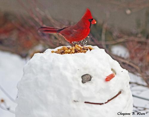 А можно снеговика сделать не только веселым, но и практичным - соорудить кормушку для птичек.