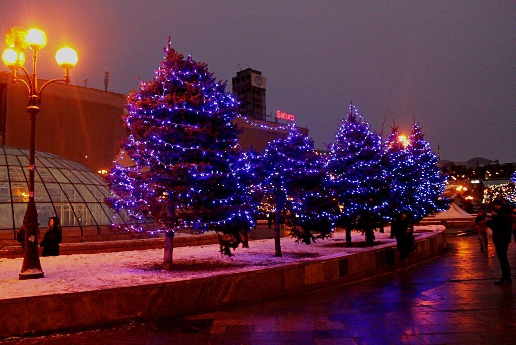 Иллюминация на деревьях Майдана