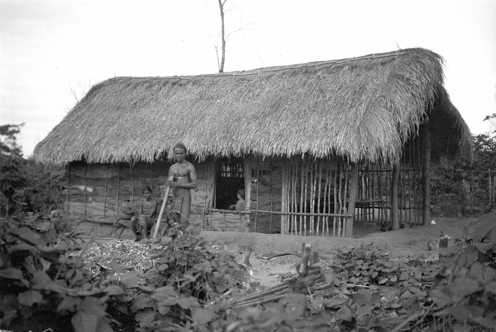 352. Мадугалла. Лесной ведд пропалывает фасоль в долине