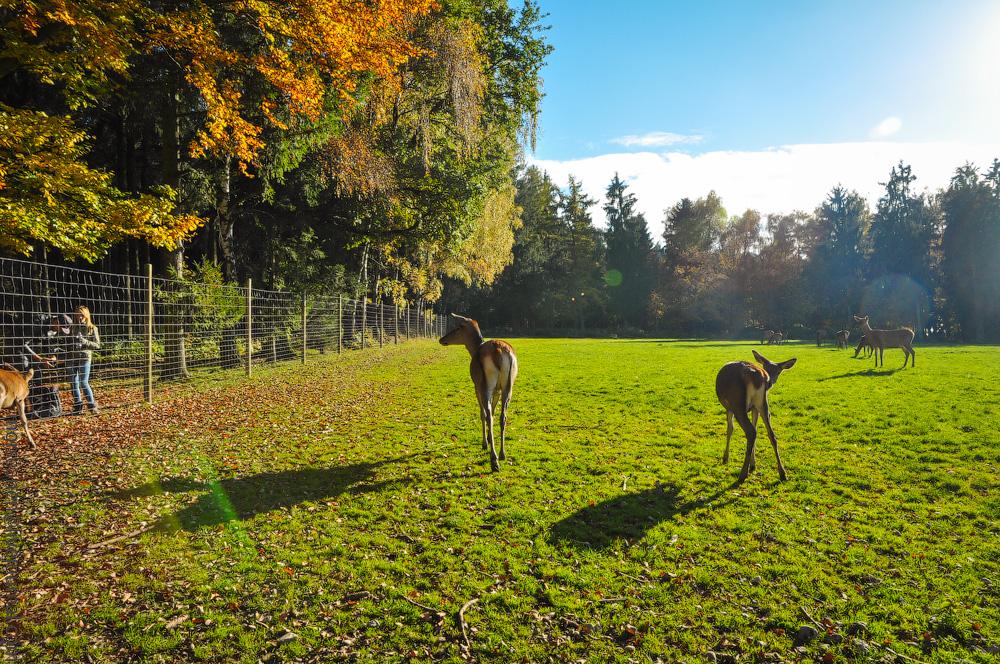 Tierpark-(17).jpg