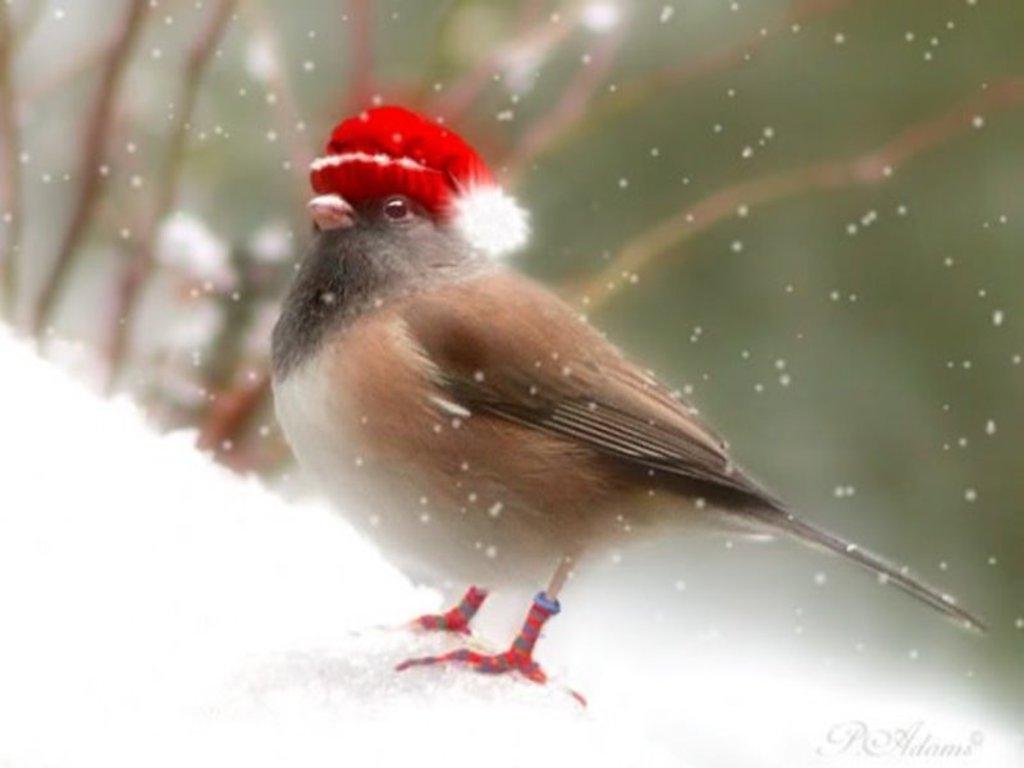 питер-зима-классно-1.jpg